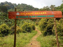 Menjadi Milyader Di Usia Muda Dengan Bertani Cengkeh Di Gunung Ciung